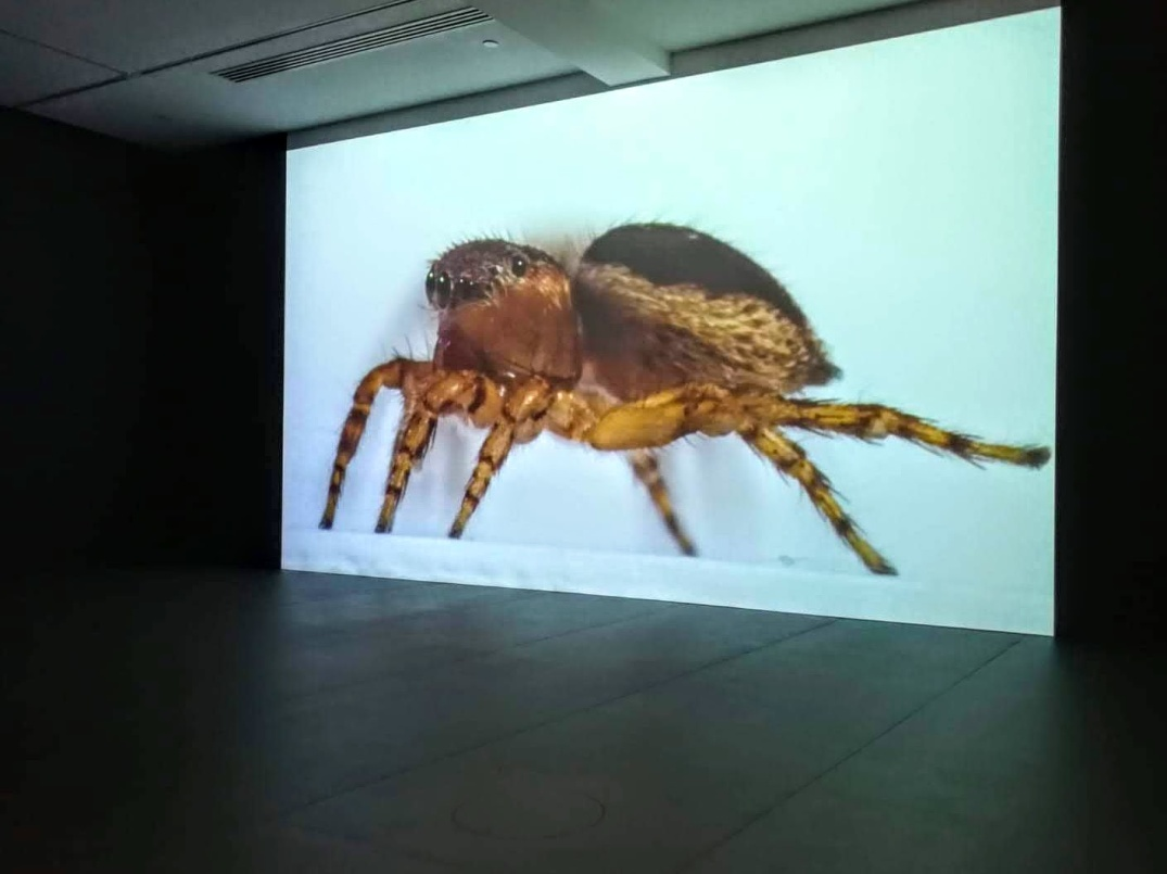 spiders-at-mca-2019